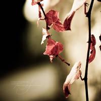 Petals by notoca
