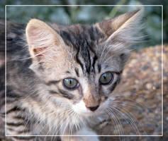 Kitty-sweety by maska13