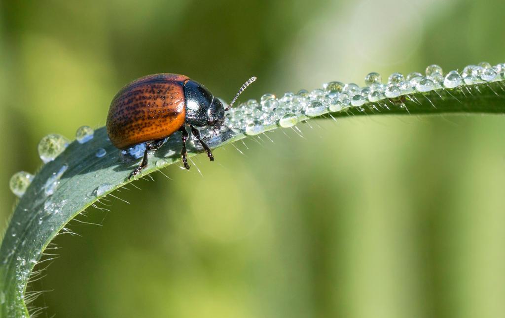 Ladybug by maska13