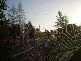 Morning Spiderweb by adamwparsons
