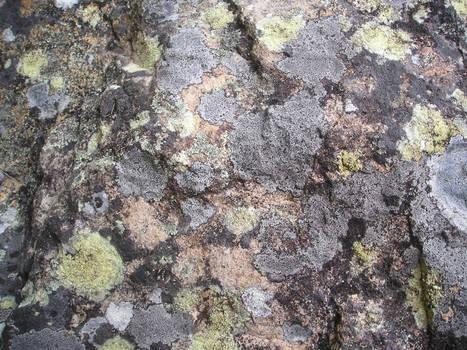 Rock covered in Lichen