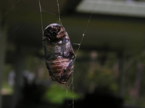 Bug in a web