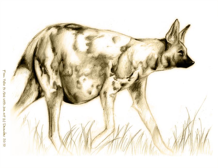 Pregnant African Wild Dog 2 By Littlepolka On Deviantart