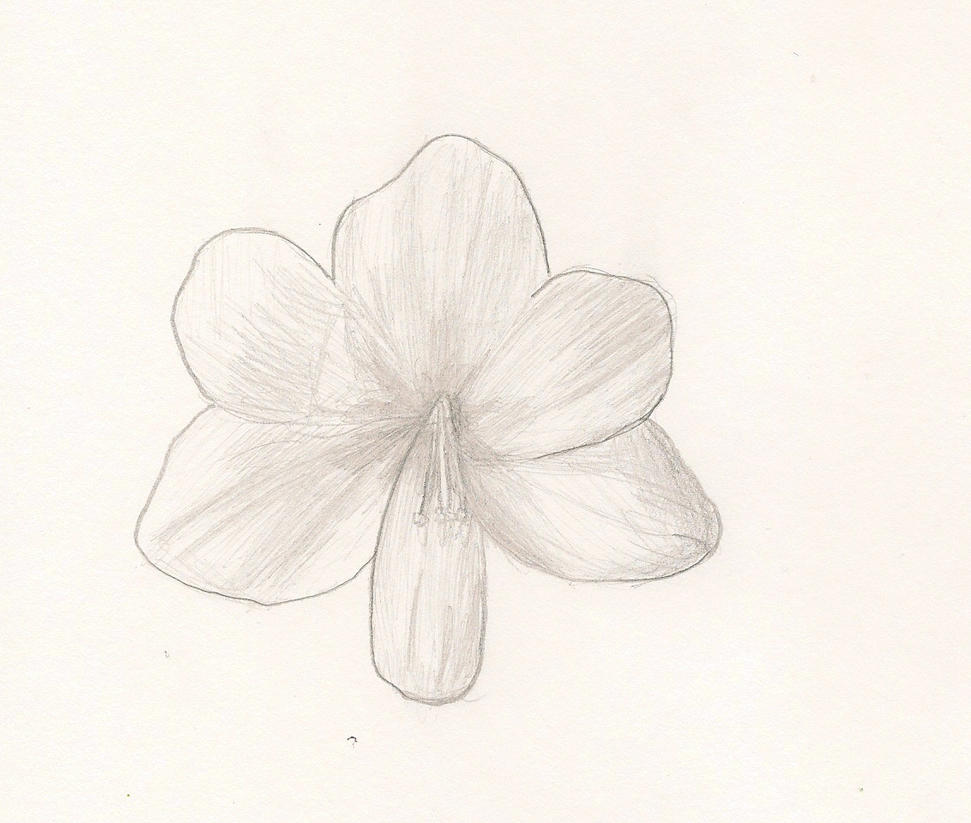 amaryllis coloring pages - photo#35