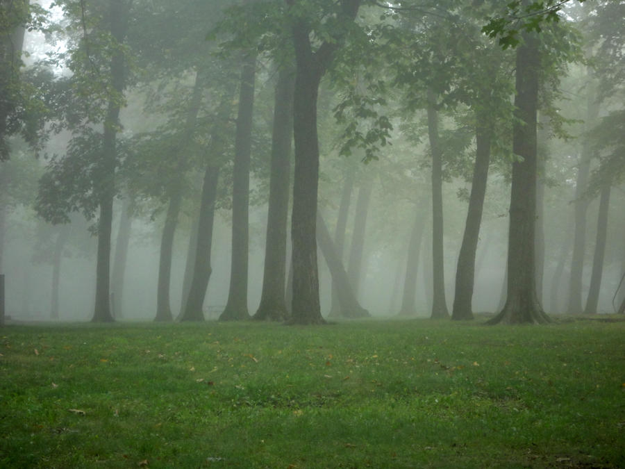 Fog in a Tree Line by Nicolekaedan