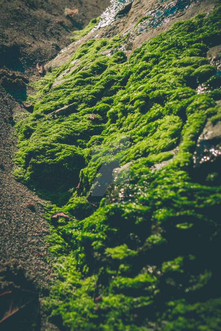 Sea Moss by DanWilliamsPhoto