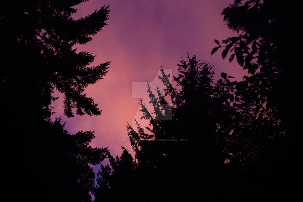 Pink Sunrise by DanWilliamsPhoto
