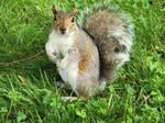 Photogenic Squirrel  by Diamond567