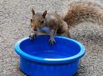 Squirrel with a bowl by Diamond567