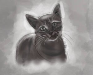 study of light and shade - a Cat