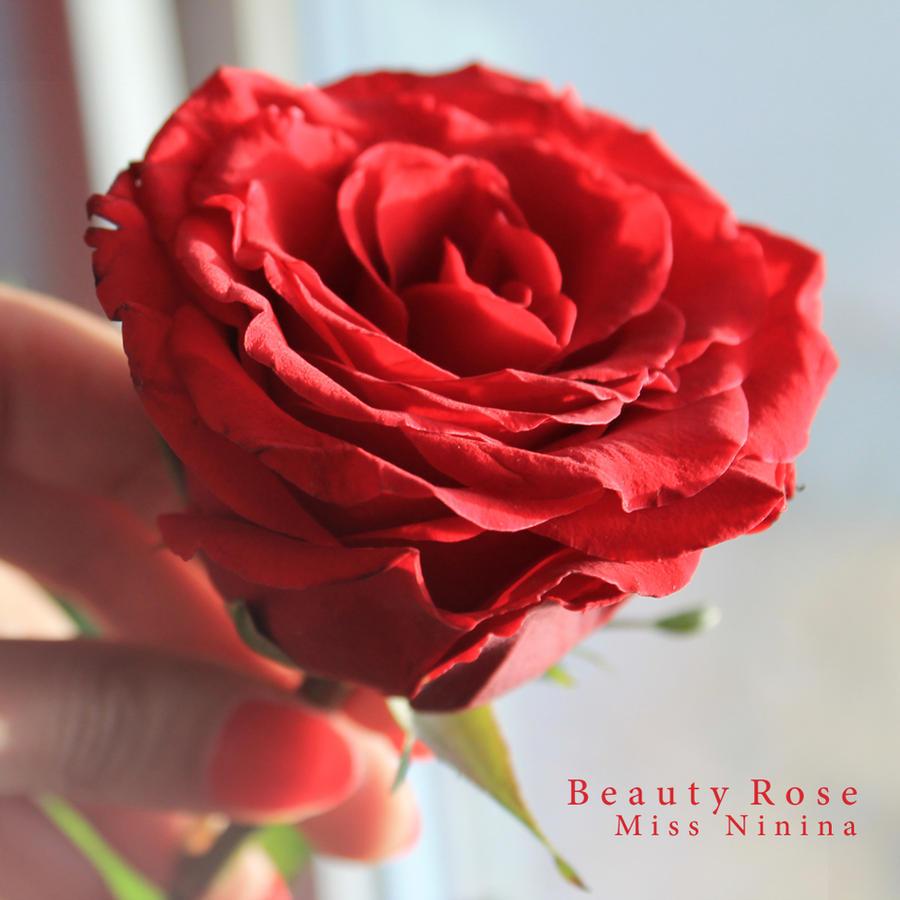 Beauty Rose by Miss-NiNiNa