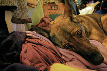 Laundry + Dog by Yreka
