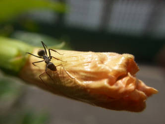 Sri Lankan Ants
