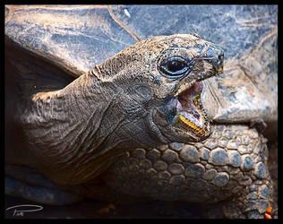Tortoise by Photo-Cap