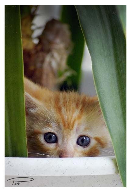 Peekaboo by Photo-Cap