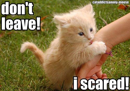 cute scared kitten! by myers30534 on DeviantArt