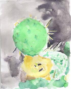 Cactus 2010 09 17