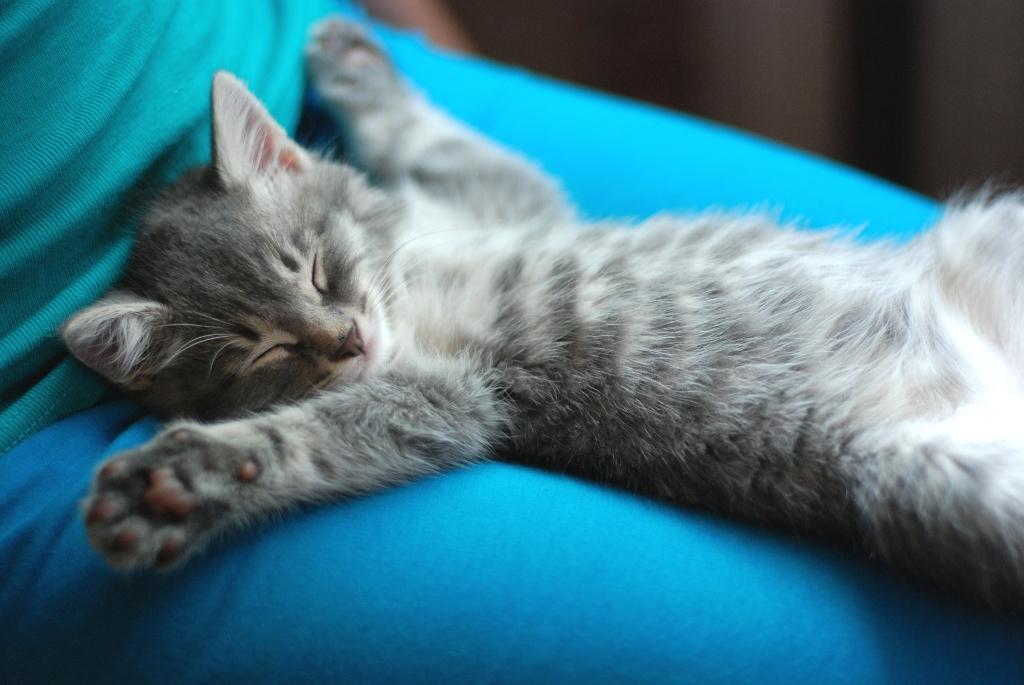 Kawaii Kitties  - Page 2 Masik_by_vadikus