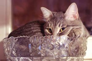 Masik the cat by vadikus