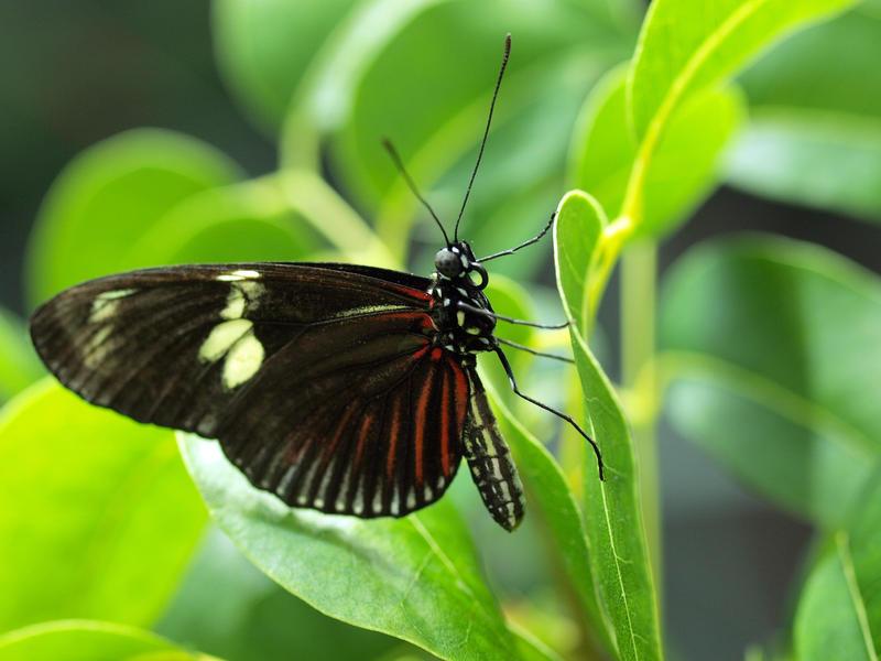 Tropical Butterfly by mattaphoreTropical Rainforest Butterflies