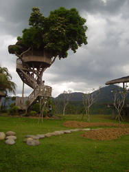 A lonely tree house