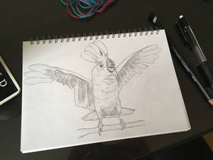 Cockatoo Sketch - Crazy Birb