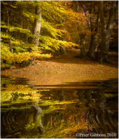 Autumn Gold 3 by Photo-Joker