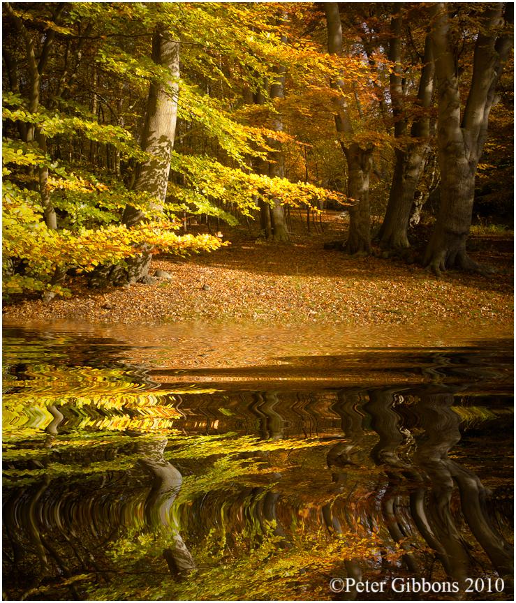Autumn Gold 3 by Photo-Joker