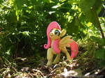 A Frolic thru the Forest 1