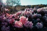 Spring Spirit by Laerian