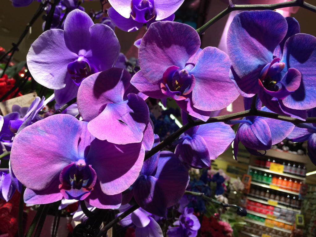 The Most Beautiful Orchids I Have Ever Seen By Blanca619 On