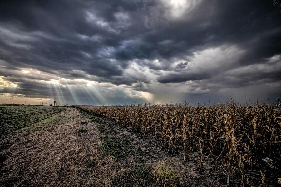 Last Corn in the Field by Bartonbo
