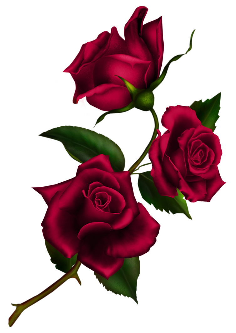 http://pre11.deviantart.net/d7f0/th/pre/f/2014/198/1/7/rose_stem_by_kittyscorpianoa-d7r4jac.png