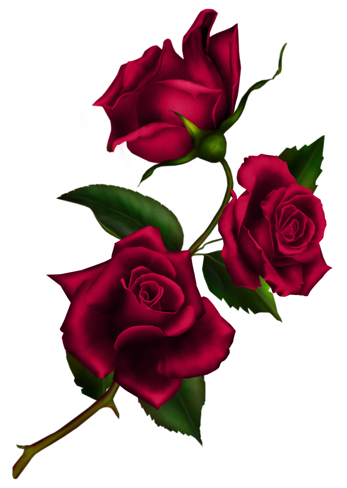 Rose Stem by Autumns-Muse on DeviantArt