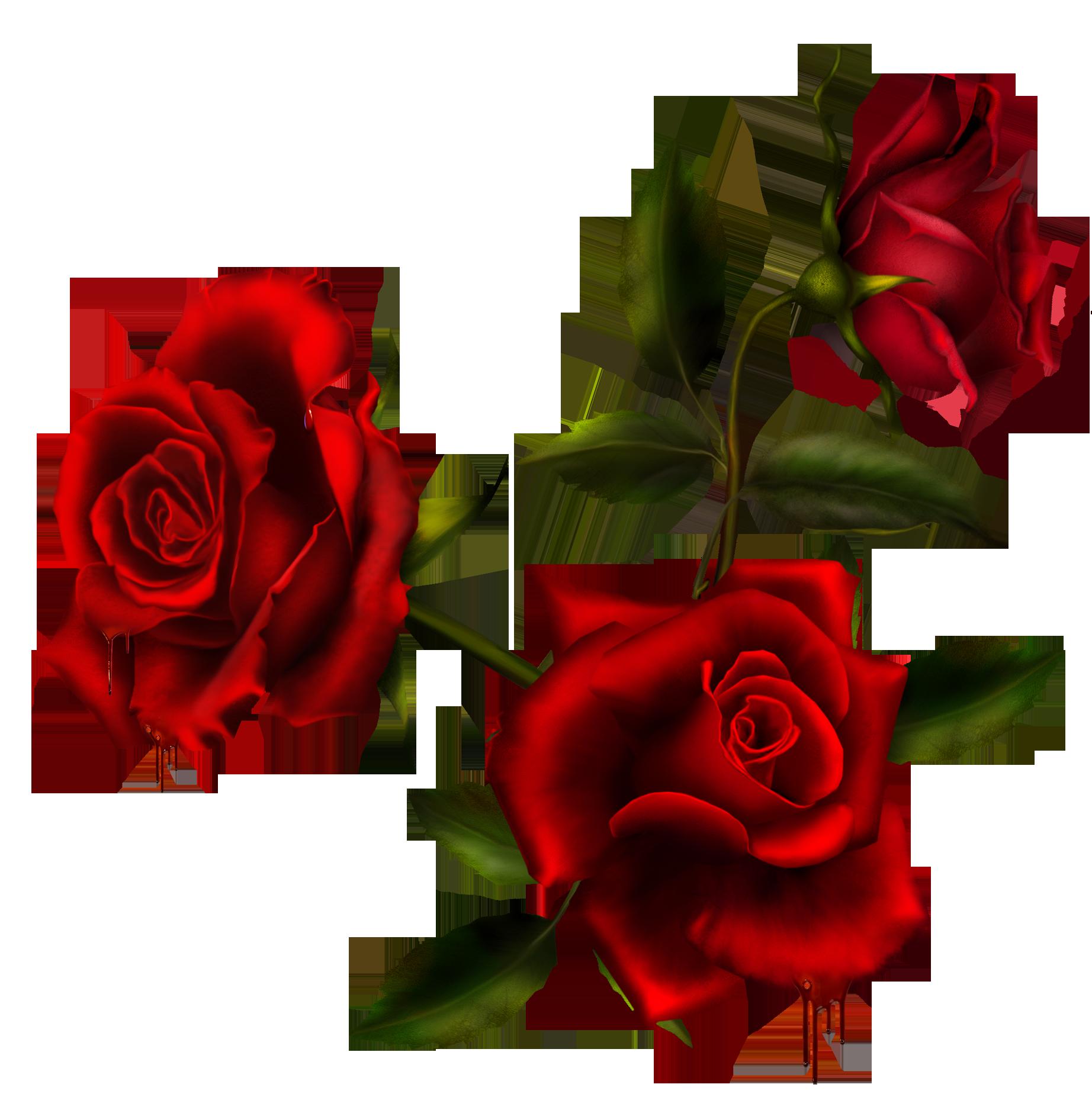 Rose Bouquet 3 by Autumns-Muse on DeviantArt