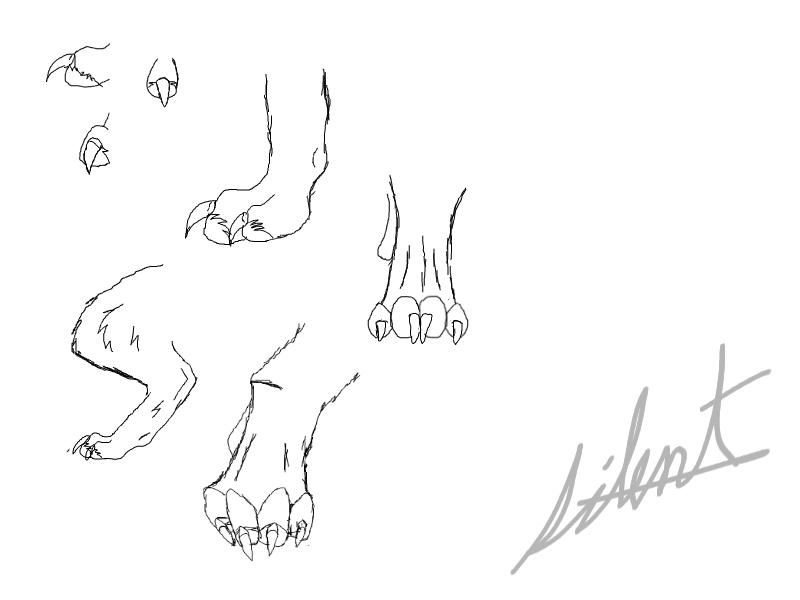Wolf Paw Anatomy by silentscreamsforhelp on DeviantArt