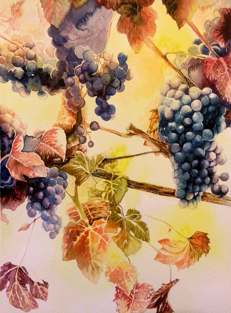Grapes by jakhont