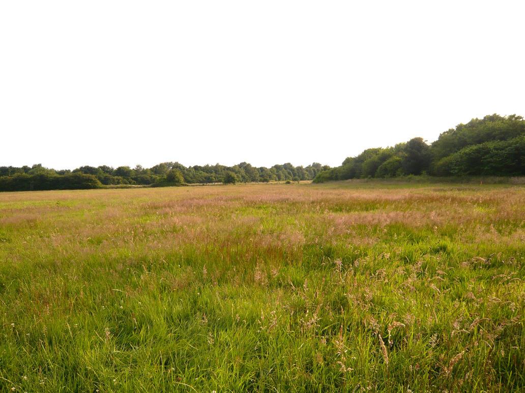 In the fields -2- by 7UV733