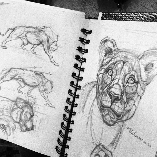 Lion Head And Body Anatomy By Thamzmasterpiece On Deviantart