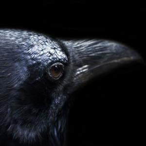 Ravensmirk's Profile Picture