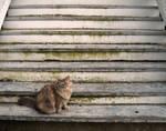 New England Porch Cat