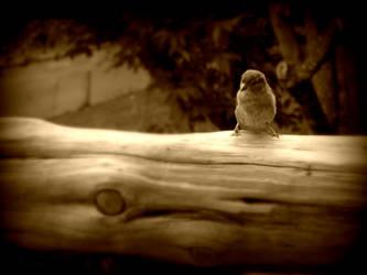 Small Bird by Checker-Bee