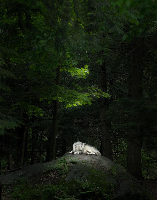 Sleeping Beauty by Pauken1