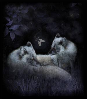 Fox and Luna