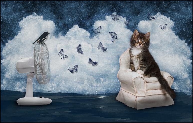 Cool Cat by saperlipop