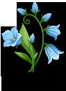 Bluebells Thank You D