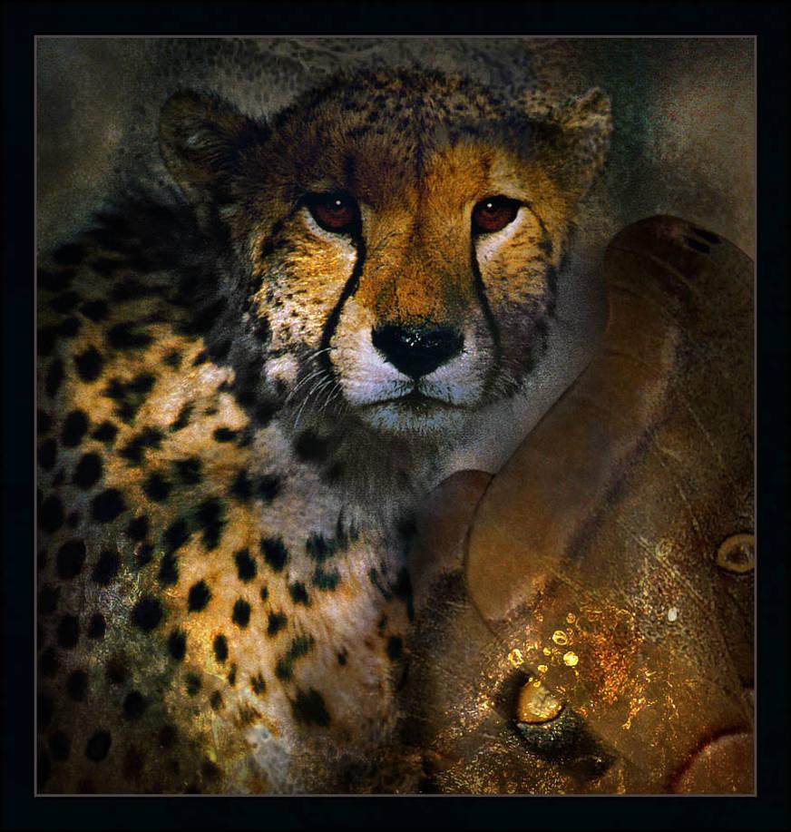 Cheetah and Moth