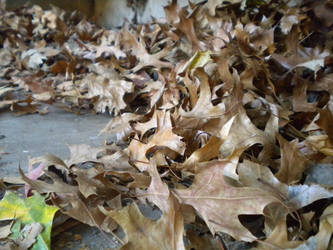 Autumnal II by Myszkowski
