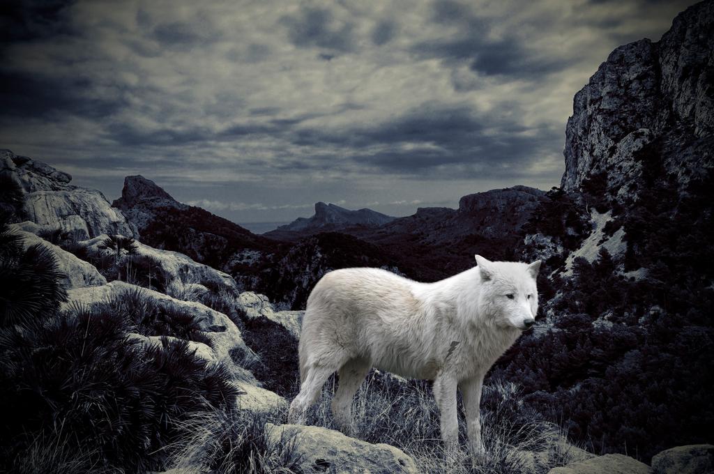 Wolf manip by cowwy94
