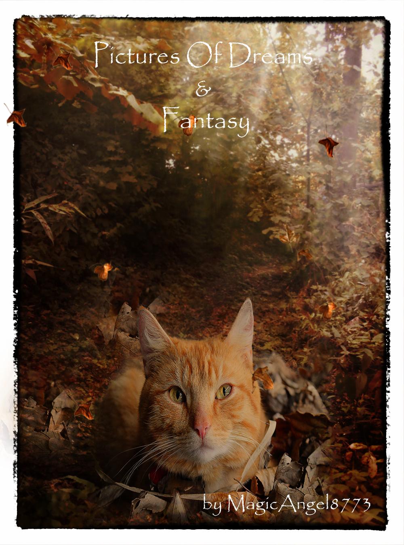 Lovely Autumn Cat